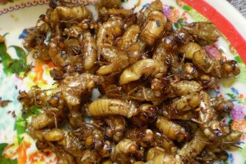 Đặc sản từ côn trùng ở Tây Nguyên