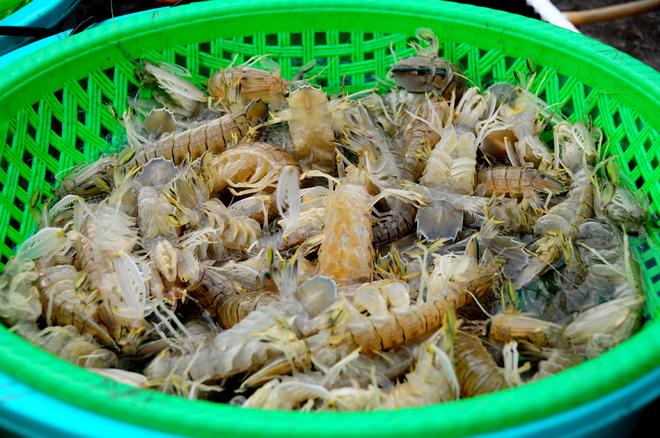 Hải sản tươi rói ở chợ cá cảng Hạ Long